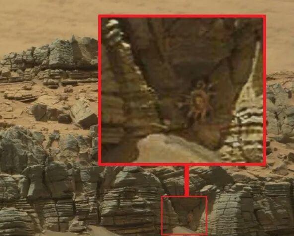 화성 생명체